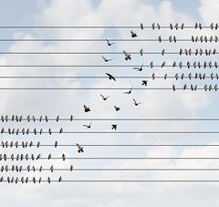 (Innovation.ca) Tags: migrating flying leaving rebellion organization change teamwork loyalty connection bird symbol birdonawire braindrain socialchange
