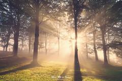 El bosque luminoso (Mimadeo) Tags: sun beam sunbeams fog sunlight light misty shine outdoor beautiful nature bright forest ray sunrays mist morning sunny landscape sunshine tree beams foggy shadow magic dreamy