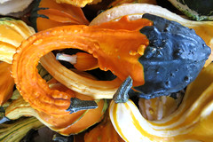 decorative squash (lisafree54) Tags: orange black curved curving neck crookneck decorative decoration lumpy bumpy squash squashes vegetable fall autumn halloween thanksgiving pattern design plant nature free freephotos cco