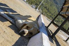 Chilling Under Shadow (illetyus / Instagram @illetyus09) Tags: dog cut cute didim aydin puppy summer travel hot