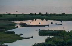 Wetlands at Dusk (Infomastern) Tags: bunkeflostrandngar malm bunkeflostrand dusk evening hav sea skymning vetland vtmark water exif:focallength=150mm geocountry exif:isospeed=500 camera:make=canon geocity camera:model=canoneos760d geostate geolocation exif:lens=efs18200mmf3556is exif:model=canoneos760d exif:aperture=56 exif:make=canon