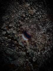 P9141544 (Jeannot Kuenzel) Tags: jeannotkuenzel jeannot kuenzel wwwjk4unet jk4u malta scuba under water underwater diving photography macro supermacro olympus epl5 zen port leica dg macroelmarit 45mm f28 asph ois inon z240 240z ucl165 s2000 moods aliensofthesea aliensofthedeepblue alien deep blue mediterranean sea maltaunderwater maltaunderwatermacro maltaunderwaterphotography bestmaltaunderwaterpictures maltamacro underwaterphotography maltascubadiving supermacrophotography underwatersupermacro underwateralien underwaterworld underwatercreature underwatermacro extrememacro superextrememacro