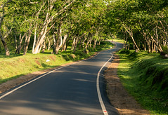 Road in Mudhumalai Tiger Reserve (Surendhar Mudaliar Photography) Tags: nilgiris ooty westernghats landscape flowers mountains nature lake roads rain deer forest hills sky tea plants avalanchi coorg mudhumalai tiger reserve travel tamilnadu surendharmudaliar
