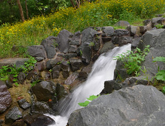 The waterfall in fall (lindakowen) Tags: waterfall fall wildflowers water centralpark rosevillemn