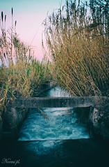 Sigue la corriente (Noem pl.) Tags: agua acequia corriente ramas hojas campo nature filtro airelibre