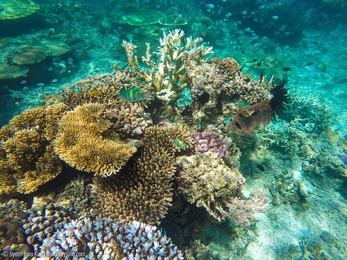 Welcome to the under water world of #wonderfulIndonesia ! I've seen many amazing world under the surface, but snorkeling near the Kanawa Island off Flores was a different level of wow. Because we were so near the surface, camera was able to capture all th