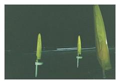 Continuamente #1 (Lalangue.) Tags: pesaro pellicola film nikonfm kodacolor