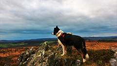 watching the world ! (matmiata) Tags: brittany bretagne finistere montdarree commana paysages landscape rocks rocher ciel sky chiens dogs bordercollie chiendeberger sheepdog canon 700d