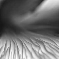 Lava and Smoke (Ramesh Adkoli) Tags: abstract closeup virajpet bw blackwhite d800e silverefexpro