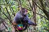 DSC03367 (lawrence.mintsong) Tags: 猴子 monkey
