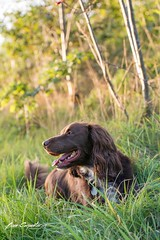 Portrait (ben carpenter photography) Tags: nikon d7100 tokina dog pet sunset sunlight animal portrait light photography photographers