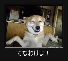 てなわけよ! #犬 (Demochi.Net) Tags: life cute sexy japan fun japanese motivator culture 日本 ペット 猫 demotivator 金 家族 結婚 ゲイ 女 子供 おっぱい 愛犬 政治 社会 巨乳 文化 眼鏡 教育 demotivators 経済 女性 初恋 r18 女子 カップル 子猫 女装 お笑い motivators 会社 少子化 企業 ユーモア 恋 悪い 格差 風刺 一言 デモチ 大喜利