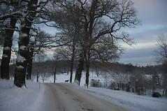 (Mercury dog) Tags: winter snow sweden stockholm
