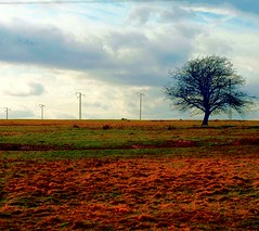 """A Lone Tree on the Curragh Plains Co. Kildare (murtphillips) Tags: history sheep farmers military plains grassland newbridge racecourse stbrigid kildare uncultivated unfenced thecurragh """"flickraward"""""""