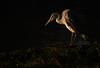 Heron in First Light (blinkingidiot) Tags: heron grey nottinghamshire universityofnottingham highfieldpark mygearandme nottinghamwildlife vigilantphotographersunite vpu2 vpu3 vpu4 vpu5 vpu6 vpu7