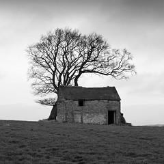 Field Barn (l4ts) Tags: trees landscape blackwhite derbyshire peakdistrict backlane whitepeak stonebarn youlgreave minoltaamount britnatparks longrake