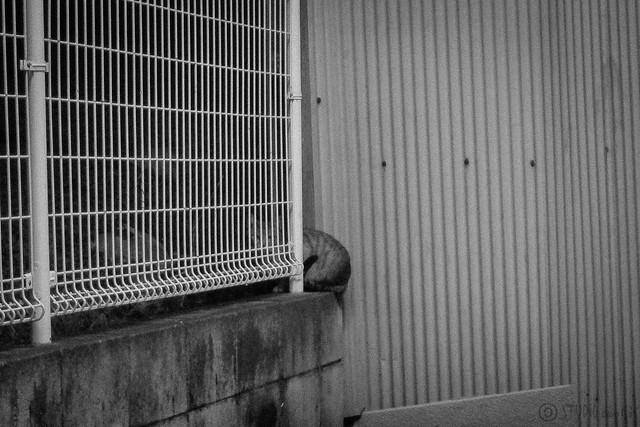 Today's Cat@2012-12-18