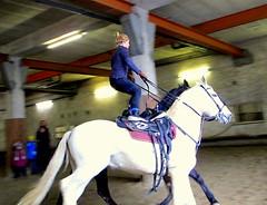 im Galopp....... (relibu) Tags: training rust pferde reithalle canong11 dezember2012