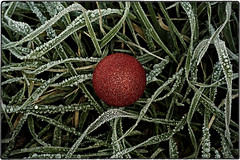 ... IMG_2093 (*melkor*) Tags: christmas xmas winter red green art ice nature grass project dark geotagged frozen experiment conceptual glassball melkor trashbit afrozenxmasproject itsalmostxmas