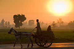 Week 51 - Sunset at Barki (Abdul Qadir Memon ( http://abdulqadirmemon.com )) Tags: pakistan horse india rural project village carriage border week 51 lahore abdul 52 2012 week51 qadir memon coth barki 5152 project52 coth5 522012 512012