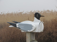 Laughing Gull Mailbox (stinkenroboter) Tags: mailbox laughinggull