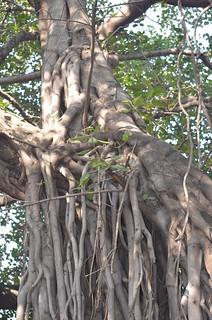 Pune (14)