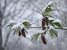 52.52 Snow Combs (lovbrkthru) Tags: winter snow pinecombs 522012