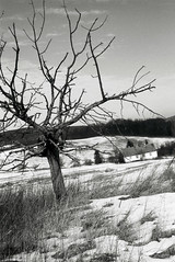 January (Timoleon Vieta II) Tags: road park new winter house tree eyes open czech father year freezing windswept lone wish solitary plain better sumava narodni timoleon