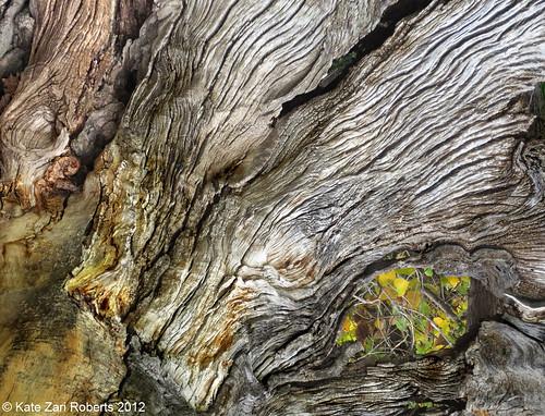 Photo - Dead Tree near Cherryvale Road