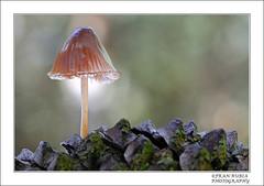 MICENA EN PIA (FRAN RUBIA) Tags: otoo sierranevada seta almeria setas parquenacional bayarcal franrubia
