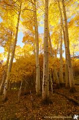 Aspen Light (Joshua Cripps) Tags: california lake fallcolor grant sierra aspen eastern indurotripod nikond7000 acratechballhead