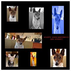 Mr. Enzo - Birthday Boy (tacosnachosburritos) Tags: birthday boy chicago style trouble basenji doggy maker 13 roo westtown yodeler mrenzo goingrogue