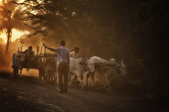 Diversion (Chesil) Tags: street morning travel light people india bullock scene cart chesil
