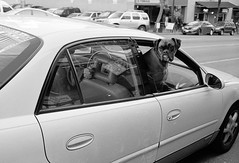 130111 Goedert + Waterfront 013 (erikpettee) Tags: seattle street blackandwhite bw dog animals washington iso400 d76 35mmfilm leicam7 fujineopan400 processedathome kodakchemistry leicasummicron35mm6elementf2
