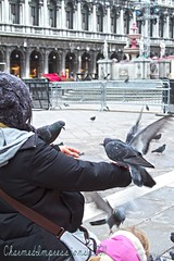Pigeon Feeding (livininfrostytown) Tags: venice costumes italy holiday history beautiful birds amazing wings wildlife pigeons famous flight landing celebration event carnivale feedingthebirds 2011 sanmarcosquare frostytown charmedimpressions