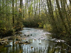 Bear Creek, Surrey (careth@2012) Tags: scenery britishcolumbia beautifulearth amazingnature myfavoriteforestphoto loversoflandscapes thebestofbeautifulearth chariotsofnaturelevel3 chariotsofnaturelevel1 chariotsofnaturelevel2 chariotsofnaturelevel4 executivemembersofbeautifulearth
