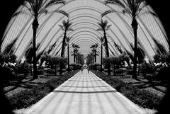 Symmetrical Black and White in Spain, Valencia (Chacky) Tags: metrical couple holding hands sunny sadness happy valencia spain summer2016 europe may traveling bw streetphotography chill love syme black white monochrome whiteblack grey travel traveler landscape spanish museums lonelyplanet trips backpacking canon 600d canon600d dslr digital lens 1855mm views oceanogrfico