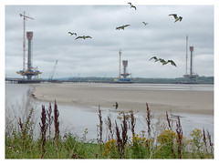 OoF Mersey Crossing Construction (foggyray90) Tags: merseycrossing blackheadedgulls gull outofframe oof stancheons construction spikeisland widnes halton runcorn
