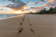 Sunrise prints (fotoshane) Tags: puertorico luquillo beach luquillobeach lapared laparedbeach travel landscape pet dog dogs fotoshane prints sand sky sun sunrise caribbean caribbeansea