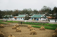 Countryside near Kimchaek (Frhtau) Tags: dprk north korea countryside field feld rice harvest landwirtschaft korean people leute street scene daily life asia asian east nordkorea cooperative farm architecture building gebude architektur design scenery   choxin  outdoor      corea del norte core du nord coreia do coria    culture landstrase public