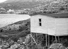 Bonavista to Eastport-143 (janetliz) Tags: salvage newfoundland shed boathouse stilts blackandwhite