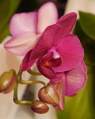 Indoor nature (nilsw) Tags: fotosondag fs160911 natur