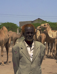 The Camel Market (Clay Gilliland) Tags: somaliland camel hargeisa africa youngpioneertours