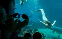 Seaworld 190916-7438 (~.Rick.~) Tags: angel brayden ethan goldcoast gordon michelle omniadoco queensland rickmonk seaworld family fun mainbeach australia au