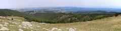 Mont Aigoual view (www.JnyAroundTheWorld.com - Pictures & Travels) Tags: france cvennes massifcentral occitanie nature wilderness roadtrip outdoor canon jnyaroundtheworld jenniferlavoura panoramic pointofview montaigoual meyrueis vautour birdofprey lozre gard