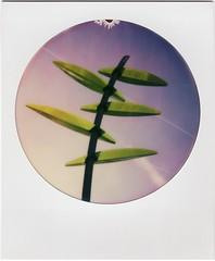 (Martin PEREZ 68) Tags: arbre tree abstrait abstrat color couleur polaroid polaroid660 impossibleproject impossible minimalism minimalismo minimalisme instant instantfilmcolor instantan