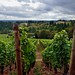 Vineyards Stretching Down the Valley and the Willamette Countryside Valley Beyond