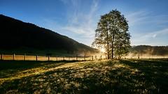 XPRO1003 2 (Ladimannskipanni) Tags: alpen karwandel baum tree sun star blendenstern landschaft natur geroldsee