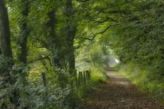 An Autumn walk (jillyspoon) Tags: autumn path walk canon70d leaves leaf tree treelined physgill canon canon70200 70d scotland dumfriesandgalloway wigtownshire walks autumnpath