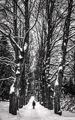 Maalminhautausmaa (elavats) Tags: trees winter finland helsinki woods alone journey panasoniclx5 maalminhautausmaa